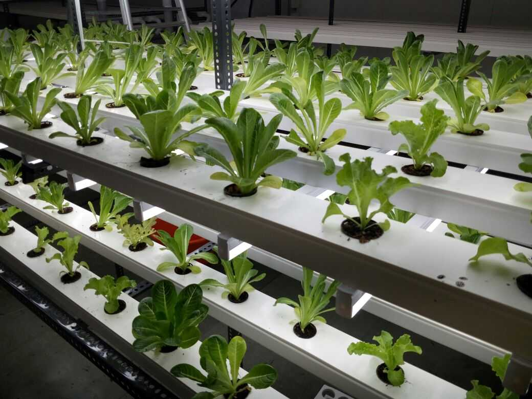 hydroponic farming Hydroponic micro farms 24k likes we are passionate about local fresh produce, self sufficiency, sustainable farming methods and organic agriculture but.